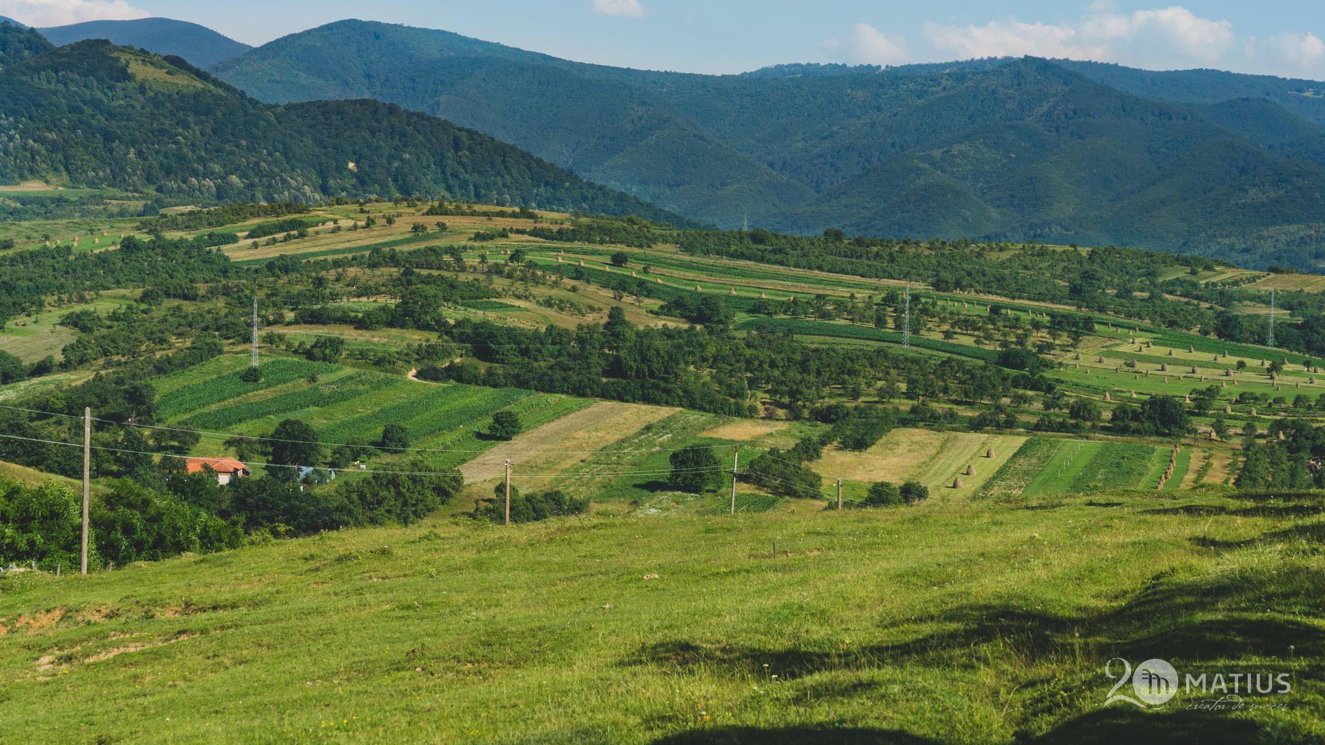 wewilder armeniș